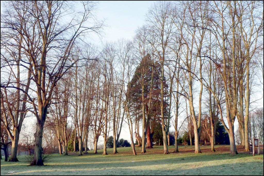 Greville Smyth Park - January - 366 Days Photography Project