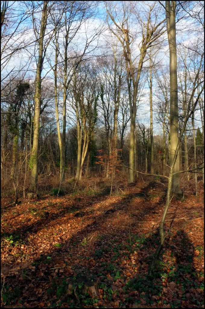 Leigh Woods - January - 366 Days Photography Project