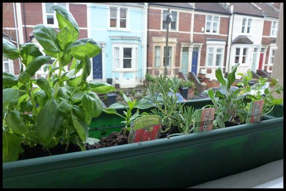 chilli and herb garden © Buttons and Beeswax Knitting Blog